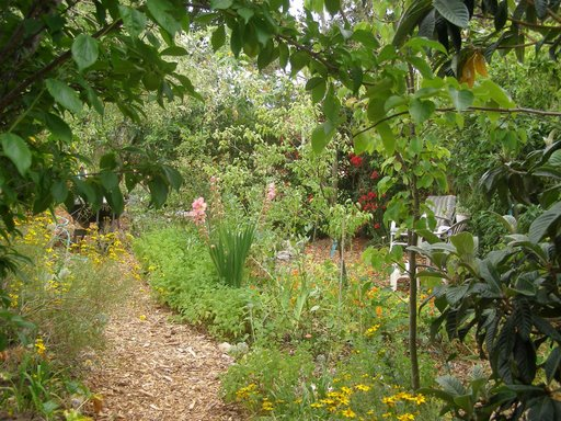 Example of a mature food forest