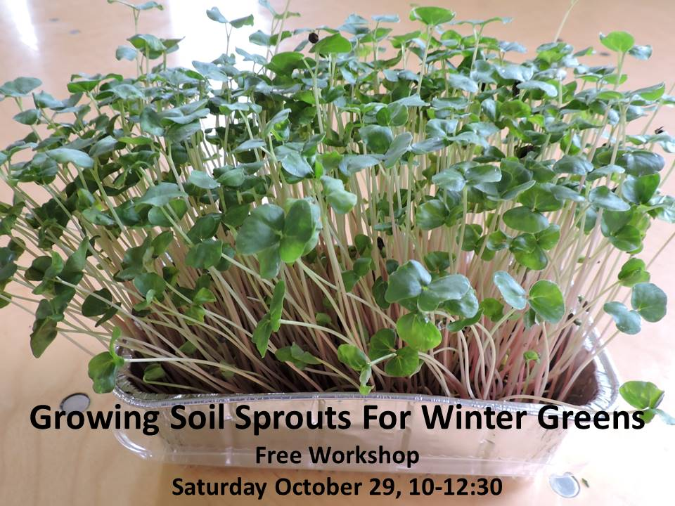 Growing Soil Sprouts for Winter Greens - Free Workshop