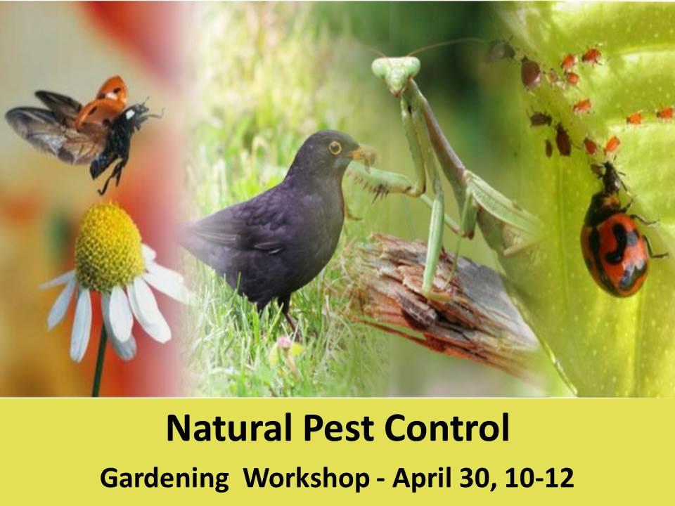 Natural pest control workshop April 30, 10-12