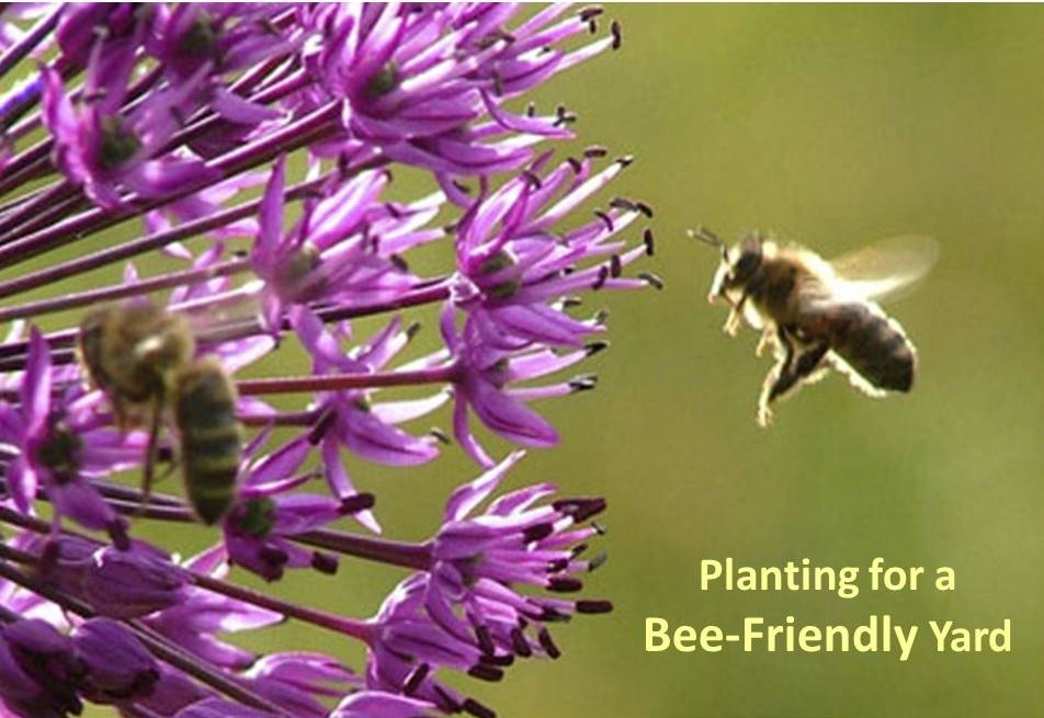 Planting for a Bee-Friendly Garden
